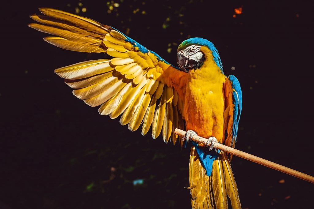 pappagallo-jpg